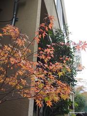 PB220900 (takafumionodera) Tags: japan olympus hakone omd em1   goura