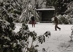 2015_12_13_020_hi (photo_graham) Tags: snow hockey icerink lithiapark osf keepingashlandinfocus