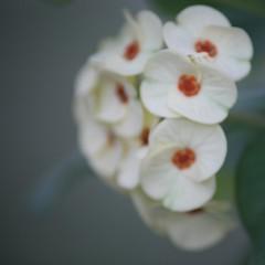 Garden flowers (Simone Scott) Tags: flower cayman caymanislands caymanbrac simonescott