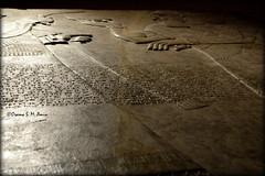 Assyrian alabaster bas-relief from Nimrud housed in Scotland (Assyria, Babylon, Akkad, Sumer...) Tags: scotland edinburgh iraq nationalmuseumofscotland mesopotamia assyria ashurnasirpal nimrud kalhu northwestpalace calah