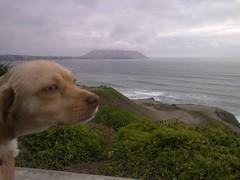 Lima - Parque Yitzhak Rabin (Santiago Stucchi Portocarrero) Tags: miraflores lima perú santiagostucchiportocarrero hund perro can cane chien dog hound