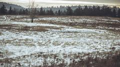 Winter_25 (losing.today) Tags: nature oregon outdoors pacificnorthwest portland pdx portlandor portlandoregon cold coldseason winter trees