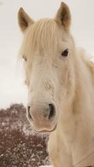 Le meilleur ami de l'homme ! (passionpapillon) Tags: animal cheval horse cavallo caballo équidé équino portrait
