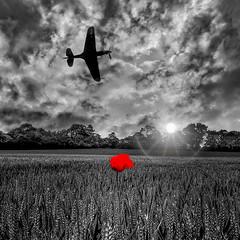 POP0021 (Smart Aviation Art) Tags: poppy poppies poppyfield poppyfields lancaster vulcan avro spitfire hurricane aircraft military bbmf