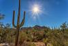 IMG_6203-Bearbeitet (dominikborsch) Tags: tucson arizona usa saguaros saguaronationalpark nature nationpark landscape landschaft desert wüste kaktus cactus