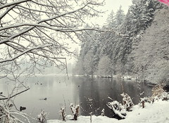 A Veil of Calm Rested Over the Day (FernShade) Tags: vancouverbc stanleypark lostlagoon snow snowscene winter winterscene water trees
