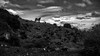 A Horse With No Name (Iñaki MT) Tags: iñaki nakteve iñakimt tail nature beauty tierno wildhorse iñakimateostierno clouds mateos iñakimateos nanuq wild background outside gallop cloud animal stallion sky horse elegant blackandwhite mammal field rozasdepuertoreal comunidaddemadrid españa es