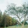佇立在微溫的冬日 (Old Soul Tai) Tags: mamiya c330f mamiyasekor 80mm 128 fujicolor pro 400h