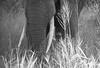 Close to nature, Tarangire, Tanzania (KronaPhoto) Tags: 2016 safari bnw africa tanzania tarangire nationalpark elephant elefant close dof structure nature natur wildlife animal big bigfive
