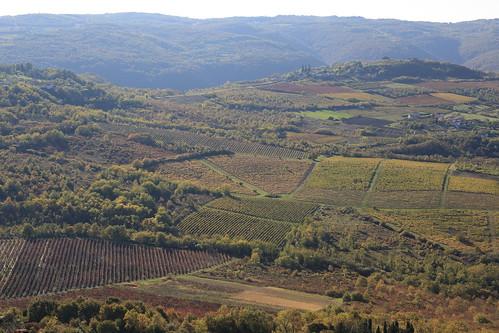 Vignes, colines et vallées