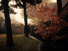 Between two homes (smithnik477) Tags: mist nature iphone winter morning wood branch tree leaves homes weather fog