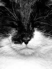 Disinterested - To The Point Of Being Rude (Neil B's) Tags: moggie just rude cat purrfect whiskas bw uninterested