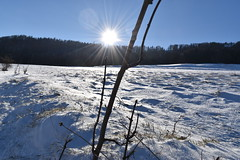 PHO_0136 (Dimi_M) Tags: neige soleil nature foret