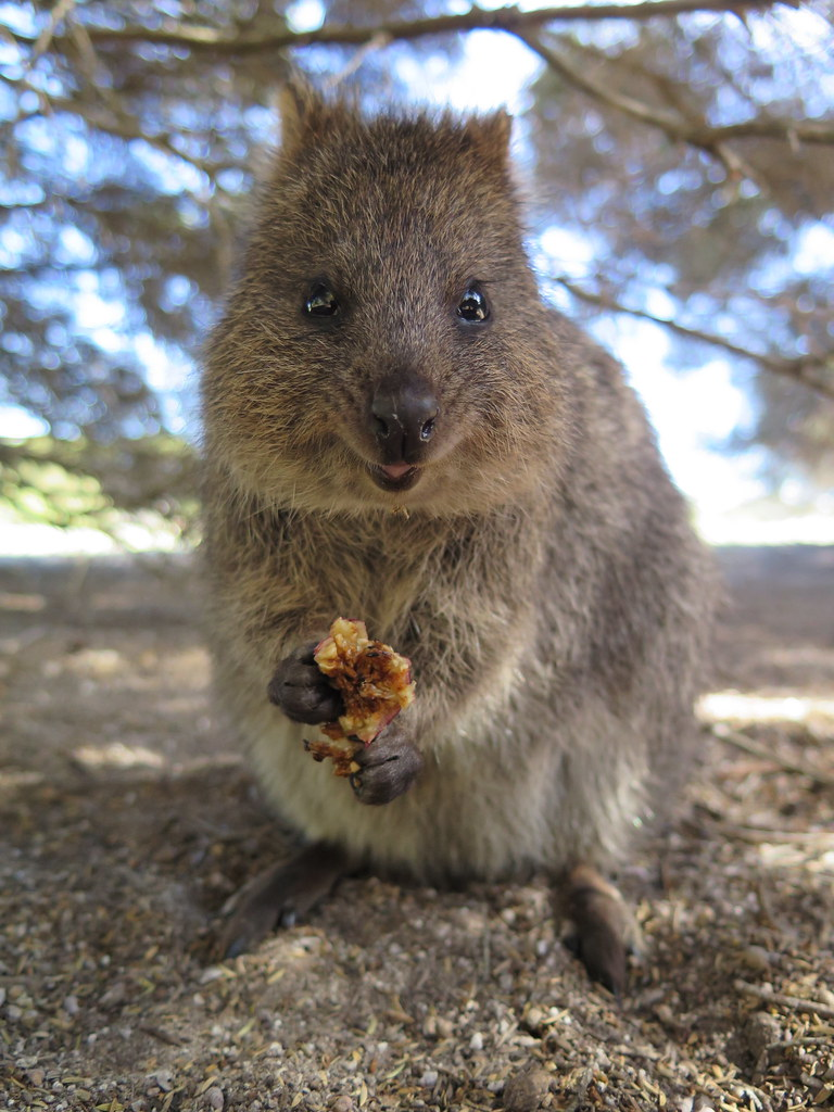 The Worlds Best Photos Of Marsupialia Flickr Hive Mind