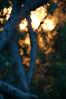 Sunset (NinianLif) Tags: kuringaichasenp terreyhills angophora bush kuringgaichasenationalpark warringahcouncil beapiercephotography northernbeaches kuringgai