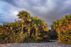 Come, Travel Back in Time with Me (SteveFrazierPhotography.com) Tags: terrain florida fl ecosystem southwest southwestern foliage habitat plants shrub herbaceous palms palmtrees path pathway sand sandy clouds cloudy overcase evening sunset shore shoreline caspersenbeach stevefrazierphotography december 2016 wading gulfofmexico canoneos60d landscape seascape waterscape