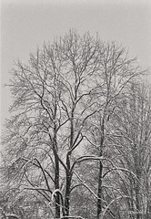 Vertical night snow (dances_w_clouds) Tags: minoltax700 rokkor135f35 ilfordhp5 pyrocathdc11100 warmer somenightshots