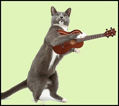 CatPlay3 (FolsomNatural) Tags: cat standing playing ukulele music spoof humor