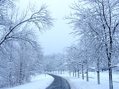 Snow Storm (Stanley Zimny (Thank You for 22 Million views)) Tags: winter storm snow white street seasons beauty