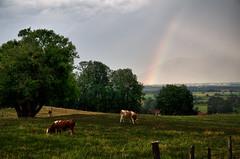 Kochelseeregion Regentag (Hannes Mauerer) Tags: rain rainbow cows wiese regen regenbogen khe oberland kochelsee kochel almwiese operbayern