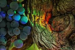 Le Temps des Vendanges (rj@ubertsb) Tags: france macro lumire cd explore temps aude carcassonne vigne raisin vendanges sbastien vigneron tamronspaf90mmf2 villalbe rjubertsb meleux