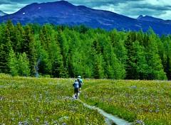 7-103 (Gnarlene) Tags: flower hiking banff healypass monarchramparts