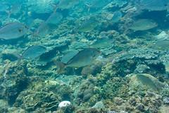 底土海水浴場 (GenJapan1986) Tags: 2015 伊豆諸島 八丈島 八丈町 太平洋 底土海水浴場 旅行 東京都 水中 海 離島 日本 nikon1aw1 sea pacificocean tokyo japan island travel underwater hachijoisland