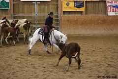 BJ1A8718 (yoann.coin) Tags: horse france western cutting ncha remoray