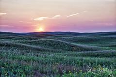 Sunset in the Sandhills (jesse_n_harding) Tags: flowers sunset nebraska dusk country hills pasture wildflowers sandhills