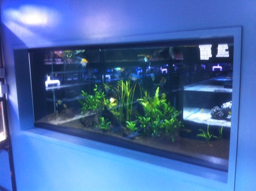 Custom Fish Systems - Fish Store - NYC - 5