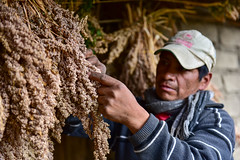 untitled-20.jpg (CIAT International Center for Tropical Agriculture) Tags: food southamerica colombia crop andes quinoa agriculture nutrition cauca upland ciat cgiar cashcrop foodsecurity purace neilpalmer