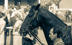 Day at the Races (UlyssesThirtyOne) Tags: horse races newmarket equestrian equine