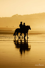 Riders (grant_lampard) Tags: horses reflection beach water silhouette canon golden cornwall riders perranporth cornwallweddingphotographer grantlampard grantlampardphotography weddingphotographycornwall