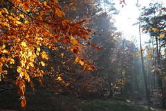 Autumn (kl.lilli) Tags: autumn light fall gold licht hamburg laub herbst natur bltter heide naturschutzgebiet fischberker