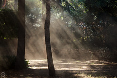 Dust in the Wind (kristianoosterveen) Tags: light italy brown sun sunlight dark wind tuscany rays dust mystic