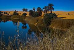 Oasis in Libya (Martijn Bergsma) Tags: africa hot tree water field landscape sand desert outdoor palm oasis civilwar serene date libya tuareg libyan ghat gaddafi tebu fezzan ubari
