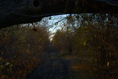 Country Roads (Series) (melleus) Tags: road old autumn summer fall abandoned nature leaves yellow garden season outdoors evening earth indian country ukraine d200 osawa imagemagick dcraw