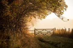 Shut (Stuart Stevenson) Tags: uk autumn trees mist field fog fence season landscape photography gold scotland gate outdoor path branches country frame hanging earl bucolic clydevalley stuartstevenson ymorning