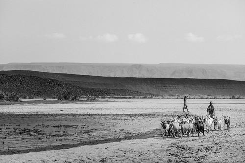Rencontre du désert