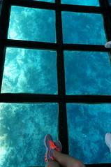here fishie fishie (rovingmagpie) Tags: coral florida reef keylargo glassbottomboat johnpennekamp johnpennekampcoralreefstatepark reefmadness keylargoprincess sfi2015