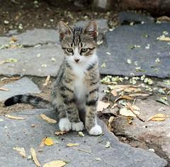 (photoa99) Tags: cat bulgaria