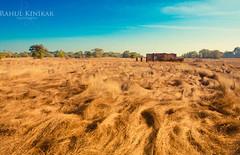 The Morning Meadow (rahul_2800) Tags: morning meadow lee maharashtra konkan kokan sigma1020mm malvan lee09gnd konkanhouse canon550d lifeinkokan kokanlife parule maachli