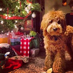 tigger-trying-to-get-on-the-nice-list-_11367421574_o