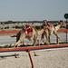 doha camel race (42)