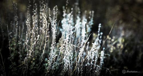 JihoNation-jiho-sohn-baltimore-photography-0006-IMG_8559 petrified-forest-arizona-national-park