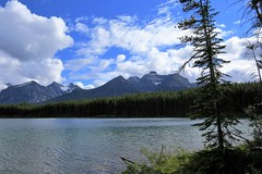 Canadian Summer (Patricia Henschen) Tags: afternoon clouds cloudy boreal forest lake lac herbert banff banffnationalpark nationalpark parkscanada parks parcs mountains mountain rockymountains rockies rocky northern canadian canada canadianrockies water lakelouise alberta icefieldsparkway bowrange
