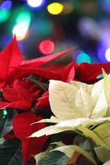 Christmas Joy (karendunne337) Tags: