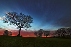 At the End of December (sphaisell) Tags: trees sunset field landscape beautiful blues hdr high dynamic range canon 1018mm wales powys sweep hill hillock atardacer