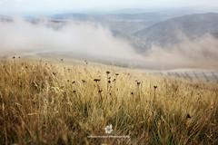 Mountain Grass (fesign) Tags: beautyinnature cloudsky colorimage day flower grass horizontal landscape mist mountain mountainrange nature nopeople outdoors photography plant romania scenics tranquilscene transylvania
