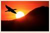 夕陽歸鳥   Bird fly back at sunset (C. Alice) Tags: light orange nature hongkong 2016 canonef300mmf4lisusm canoneos7d eos7d canon 300mm wetland bird shadow favorites50 1000views 1000v40f aatvl01 favorites100